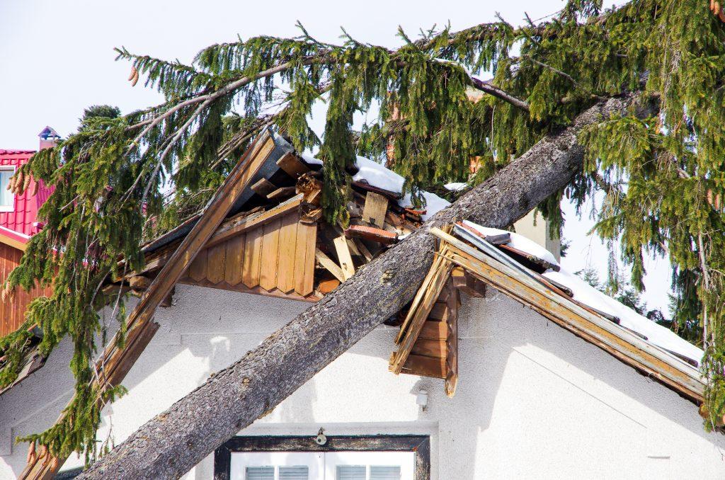 home /property restoration services